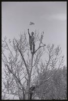 An alternate view of a man waving the American flag from the top of a tree during the Vietnam War Out Now demonstration, 24 April 1971