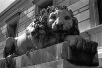 Alternate view of the lion statue outside the Corcoran Gallery of Art, Washington, D.C.